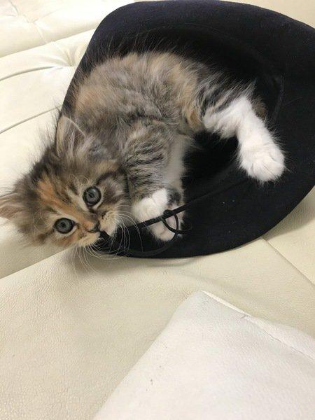 帽子の中に入る猫
