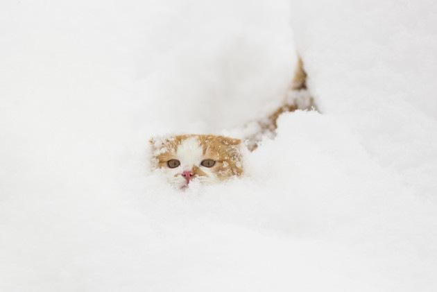雪に埋まっている猫