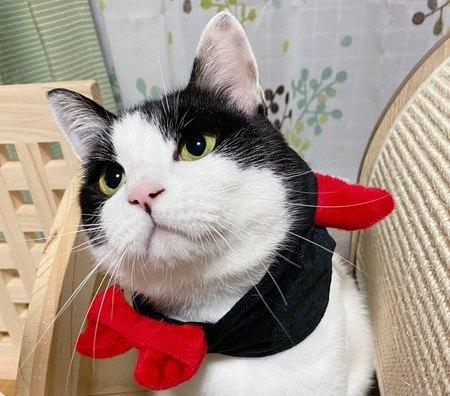 ハロウィン衣装の白黒猫