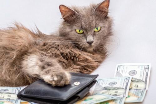 カードケースに手を乗せた猫とお札