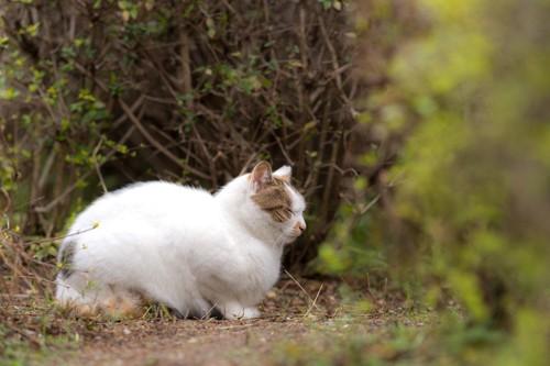 林の中の猫