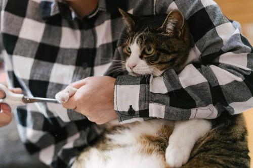 爪切りされている猫