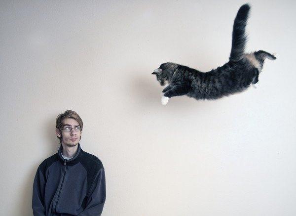 男性と飛ぶ猫