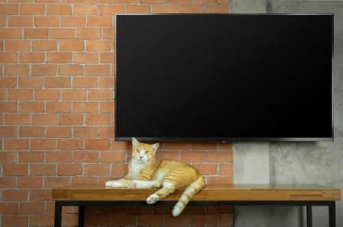 テレビの前の棚の上に寝そべる猫