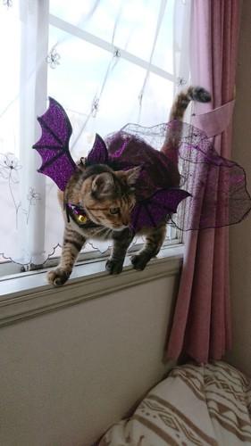悪魔のコスプレをする猫
