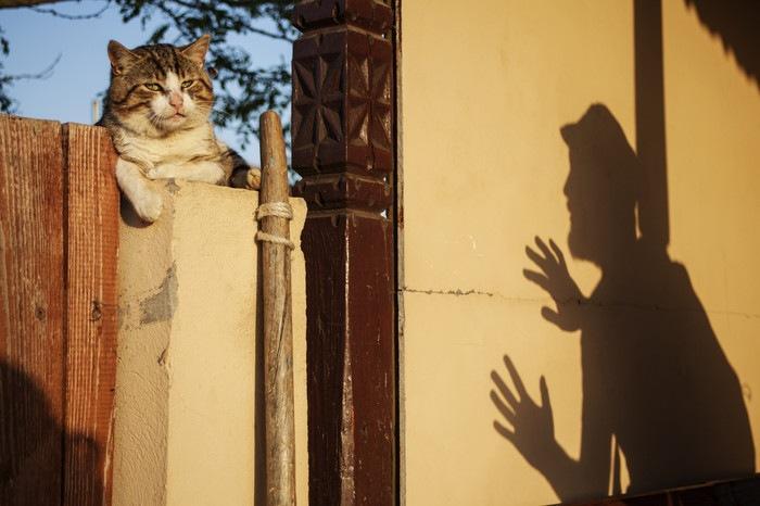 柵の上の猫と男の影