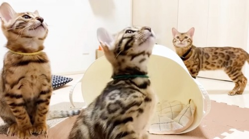 見上げる3匹の子猫
