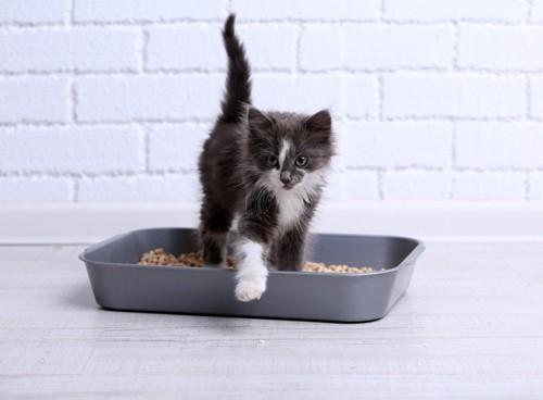 トイレから片足出ている白黒の子猫