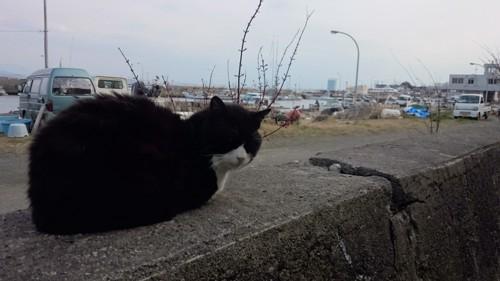 港で過ごす猫