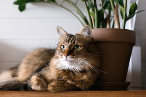 鉢にもたれる猫