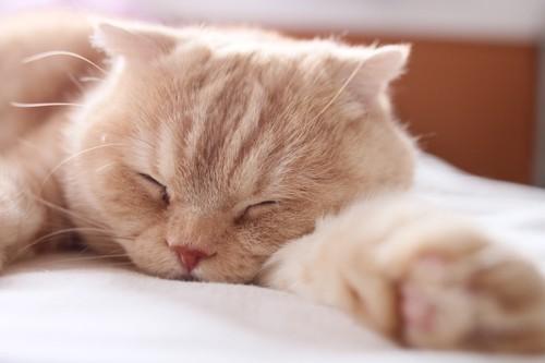 片手を伸ばして眠る猫