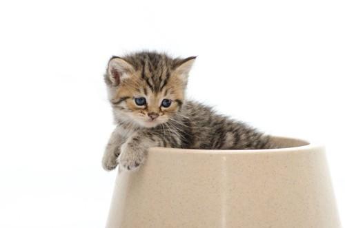 餌入れのボウルの中の猫