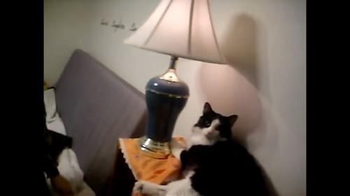 ライトと猫