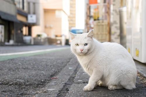 路上をさまよう猫