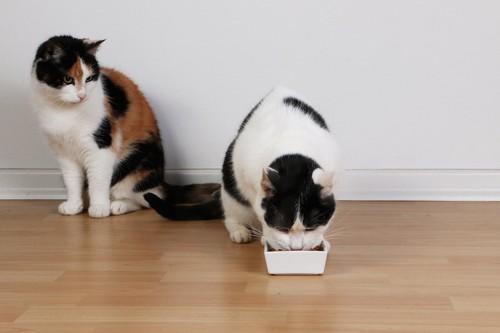ご飯を食べている猫と見守る猫