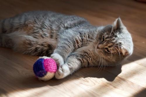 寝転んでボールで遊ぶ猫