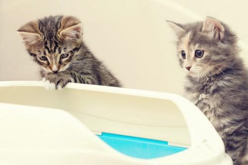 トイレをのぞく3匹の子猫
