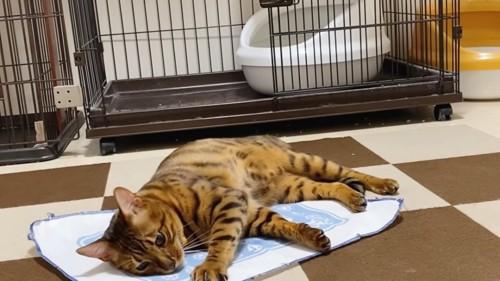 シートの上にいる黄色い首輪の猫
