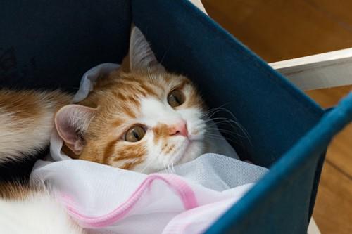 洗濯ネットにくるまれる猫