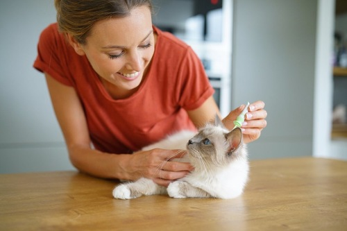 猫に予防薬を垂らす女性