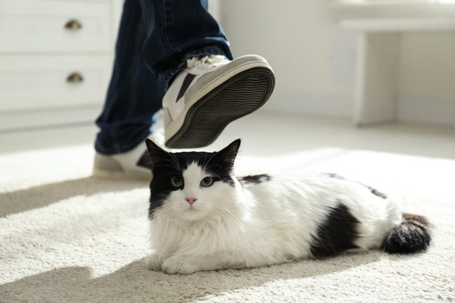 猫を踏もうとする足