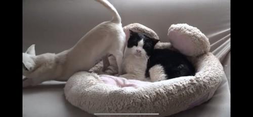 犬にお尻を向けられる猫