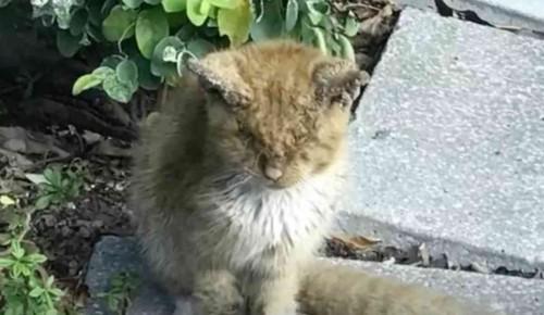 屋外にいる汚れた猫