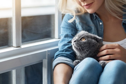 膝の上に居る猫