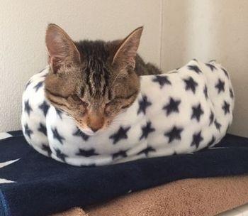 猫ベッドの中で、顔だけ写っている