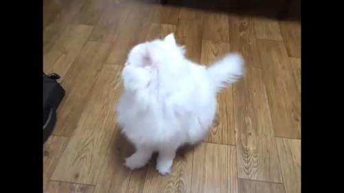 向こうを向く猫