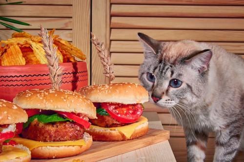 ハンバーグが入ったパンを見つめる猫