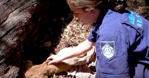 チャトラ猫の背中に触れる女性