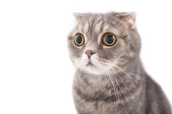 目を丸くして耳が下がった猫