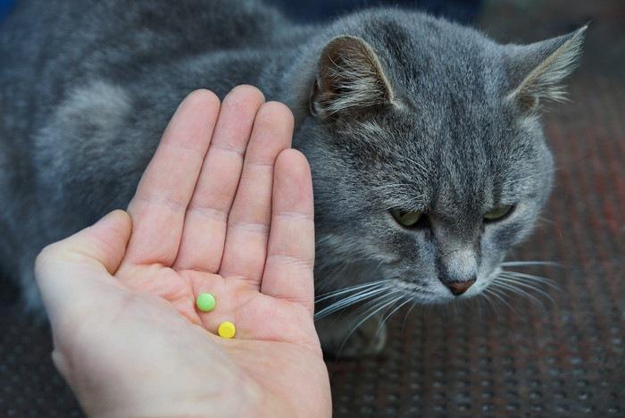 猫とサプリメント