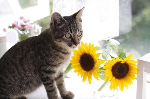 窓辺の猫と花瓶のひまわり