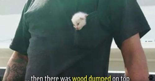 男性のポケットに白猫