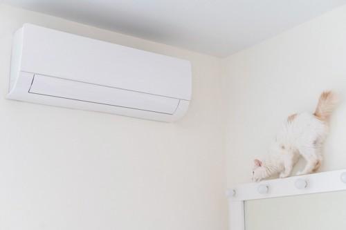 エアコンの側にいる猫