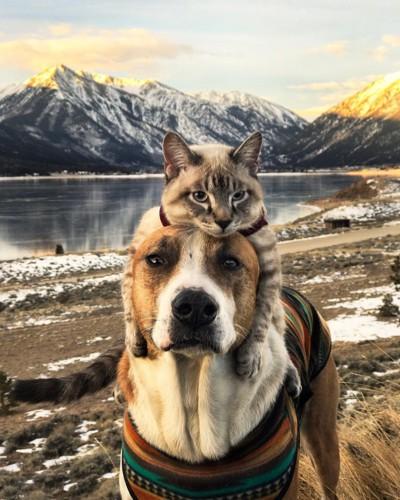 アウトドア好きな犬と猫