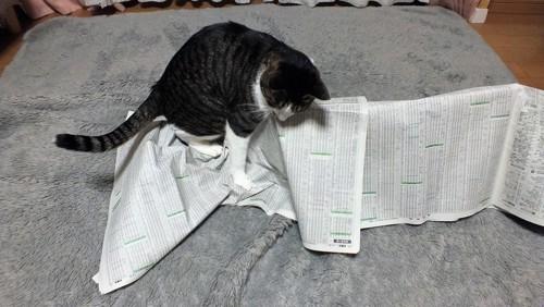 新聞紙で遊んでいます