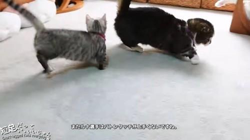 走る黒系の猫