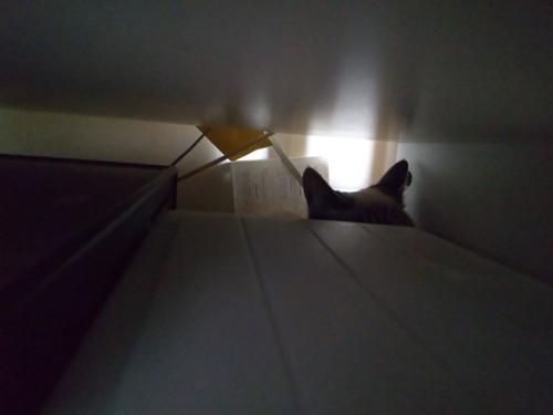 初日、私のPCデスクの下のスペースに隠れたシャルル