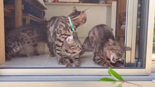 葉っぱに向かって口を開ける猫