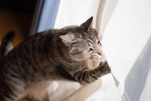 カーテンに飛びかかる猫