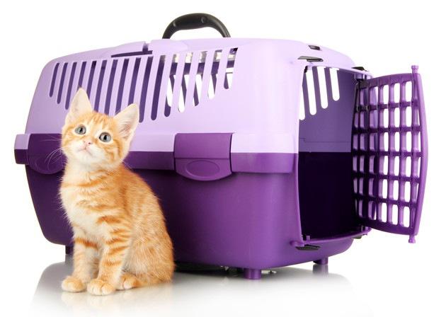 キャリーケースと猫