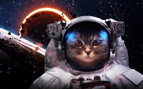 宇宙と宇宙服を着た猫