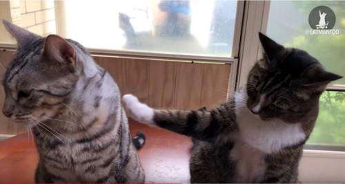 前足でもう一方の猫を触る猫