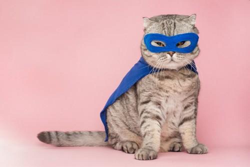 ヒーロー猫