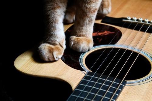 ギターと猫