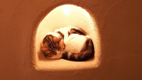 穴の中で寝るトラ柄猫