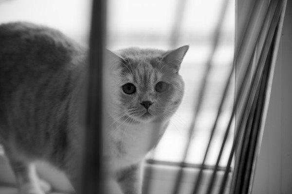 柵越しにこちらを見上げている猫